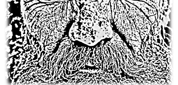Social Hermit